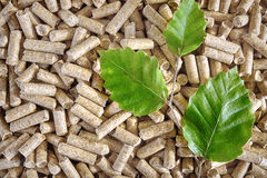 Wood pellets. Premium quality beech wood pellets and green beech leaf Stock Image