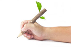 Wood pencil. Stock Photos