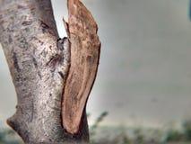Wood photography Stock Photos