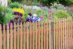Picket Fence in Backyard Flower Garden Royalty Free Stock Photos