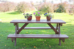Wood Picnic Table with Flowers in Country. A brown wooden picnic table with potted annual flowers on it sits in a lawn overlooking a blueberry bush garden in the Royalty Free Stock Photo