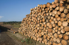 Wood in piece for the industrie Royalty Free Stock Photography