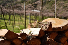 Wood. Pieces of wood cut with background vineyard Royalty Free Stock Image