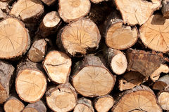 Wood Pile. Pile of fire wood logs Royalty Free Stock Image
