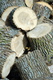 Wood pile. Cut logs ready for splitting for winter fuel Stock Photography
