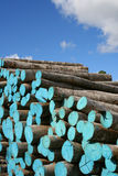 Wood pile. Painted blue Royalty Free Stock Images