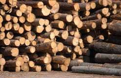 Wood pile. Wood logs stacked up in lumber yard Royalty Free Stock Photos