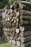 Wood pile. A pile of original wood Royalty Free Stock Photography