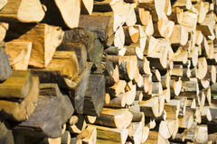 Wood pile. Pile of chpped wood lit by morning sun Stock Photography