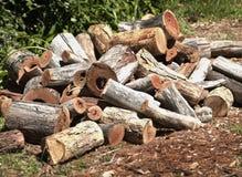 Wood Pile. In garden Stock Image