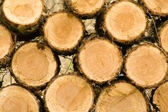 Wood Pile. Cut ends of logs on wood pile Stock Photo