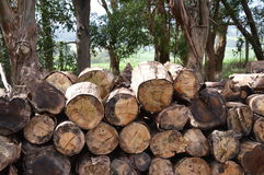 The Wood Pile. A country scene featuring a wood pile.  Photo taken Sept 2013 Stock Images