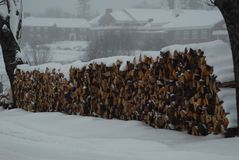 Wood pile covered by snow during a snow storm waiting to be burned. Winter scene, school buildings in distance, New England stock photo