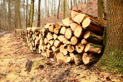 Wood pile Stock Photography