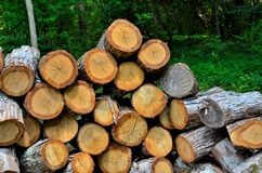 Wood pile, cut and ready to be split for firewood Royalty Free Stock Photos