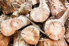 Wood Pile with five branches. Wood pile with large branches outside. Tree Felling. Cutting down a tree. Firewood Royalty Free Stock Photography