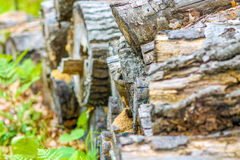 Wood pile. A wood pile in the forest Stock Image