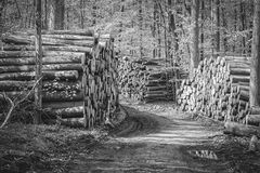 Wood pile - forest - black white Stock Images