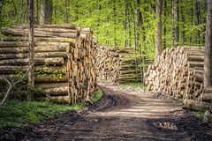 Wood pile - forest Stock Photography