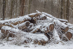 Wood pile. With a fresh blanket f snow Stock Photos