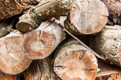 Wood Pile Large Branches. Wood pile with large branches outside. Tree Felling. Cutting down a tree. Firewood Stock Photo