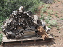 Wood Pile. On my land for burning wood in the stove here in Arizona during the winter Royalty Free Stock Photo