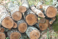 Wood pile stock image