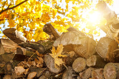 Wood in pile outdoor with sunlight Stock Photos