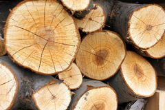 Wood pile with rings closeup Royalty Free Stock Photography