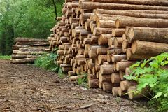 Wood pile From Sawn Pine And  Spruce Logs For Forestry Industry Royalty Free Stock Images