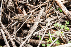 Wood Pile of small branches. Tree Felling. Cutting down a tree. Firewood Royalty Free Stock Photos
