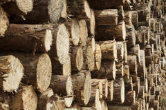 Wood pile with small strains Royalty Free Stock Photo