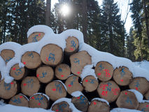 Wood pile in the snow. Wood pile in the forest with snow stock photography
