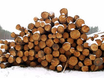 Wood pile in winter forest Stock Image