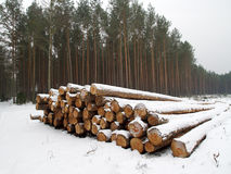 Wood pile in winter forest Stock Photography