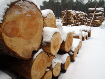 Wood pile in winter forest Royalty Free Stock Photo