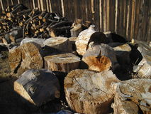 Wood Pile. For the winter.  Getting ready for the cold Royalty Free Stock Photos