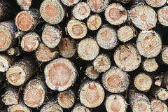 Wood piled up in the forest. Royalty Free Stock Photography