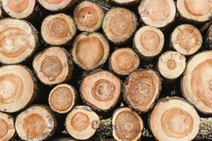 Wood piled up in the forest. Stock Photography