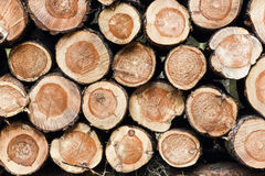 Wood piled up in the forest. Stock Photo