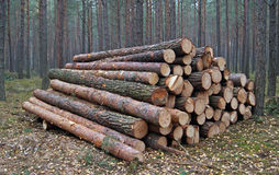 Wood piles Stock Photo