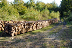 Wood piles. A lot of pile of wood in forest Stock Photography