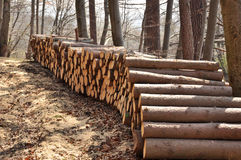 Wood piles. Timber piles/ Chopped wood on the sand Stock Image