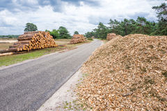 Wood piles and chopped wood. Wood pile and chopped wood in the National Park Hoge Veluwe, Netherlands Royalty Free Stock Image