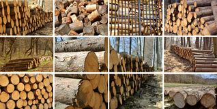 Wood piles collage. Stock Photo