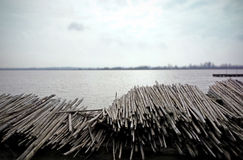 Wood piles at the lake Royalty Free Stock Image