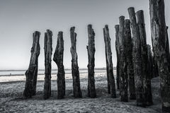 Wood piles at low tide on the beach of Saint Malo France Royalty Free Stock Photography