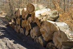 Wood piles Royalty Free Stock Photos