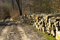 Wood piles. Stacked on the road waiting for export Royalty Free Stock Photo