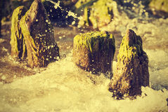 Wood pilings on beach, natural background, vintage style. Stock Photography